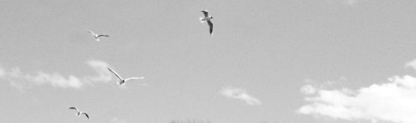 some more birds