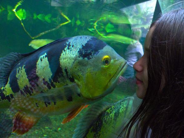 hello-fish