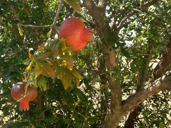 pomegrande