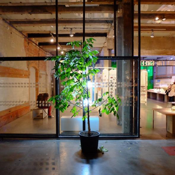 a tree inside
