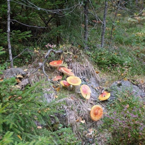 mushroom party 2